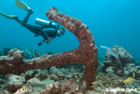 Anchor Flying Reef