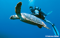 Hawksbill and Diver